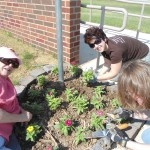 Planting the Zinnias