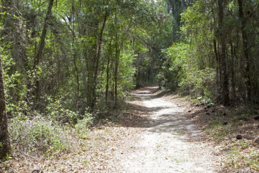 trail-at-chinsegut-wildlife-and-environmental-area-that-runs-through-various-trees-and-shrubs-2_medium
